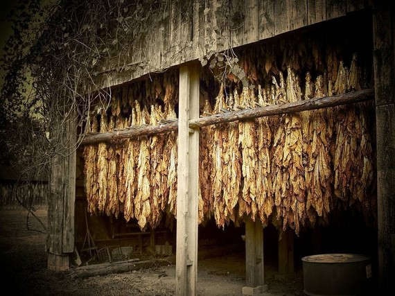 wondrous-tobacco leaf barn