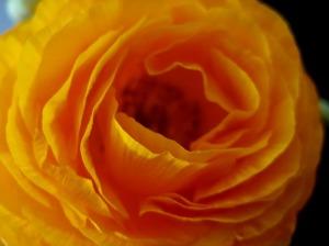 orange flowr_7735
