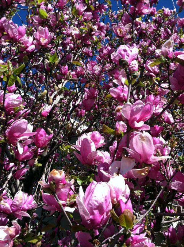 flowers0922