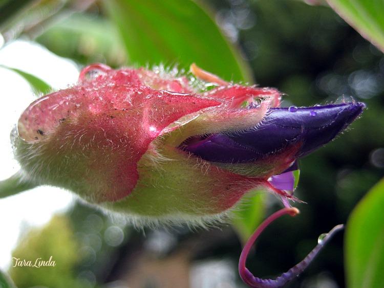 flowerM5211