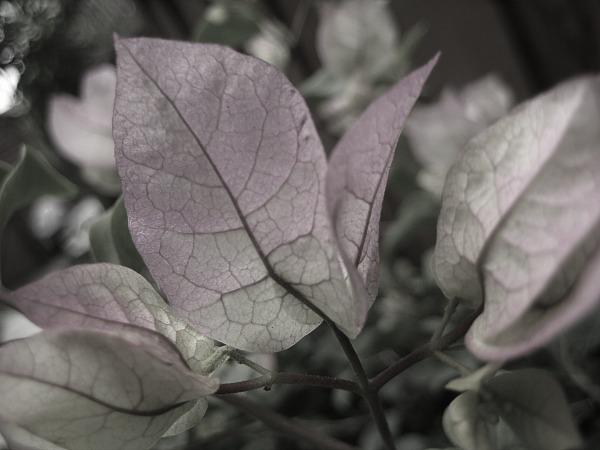 flower8486a